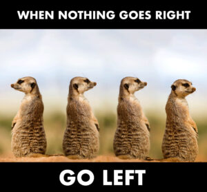 Three meerkats facing to the right with one meerkat facing left.