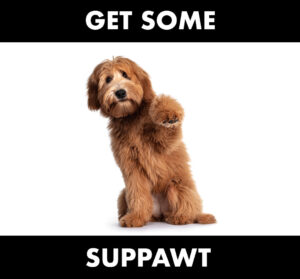 dog fist bumping with the text 'get some suppawt' superimposed