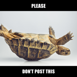 turtle on its back with the caption 'please don't post this'