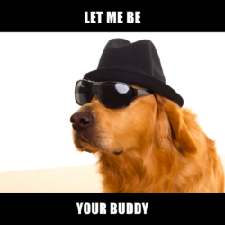 Dog disguised to look human with the caption 'let me be your buddy'