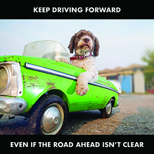 Image of a dog in a toy car with the words 'keep driving forward, even if the road ahead isn't clear'